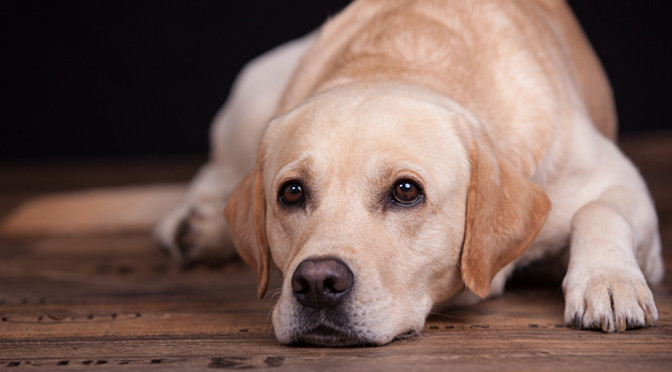 なかなかごはんを食べてくれない・・・食事で困ってる飼い主さん必見!