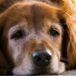 シニア犬との暮らしで気を付けたいこと