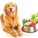 老犬に食べさせたい栄養素とレシピ集