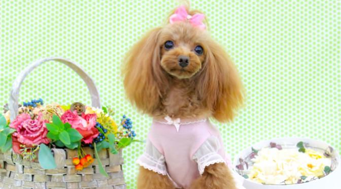 愛犬のかわいい写真を撮るための3つのポイント!