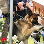 世界が感動した1枚。殉職した警察官と警察犬との絆