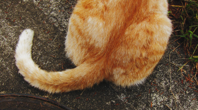 犬だけじゃない!表情豊かな猫のカーミング・シグナル