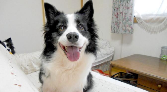 こんなにかわいい!シニア犬の幸せフェイス