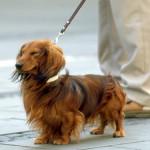 愛犬とのお散歩、綱引きになっていませんか?