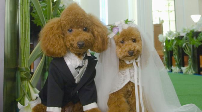 結婚式は人間だけじゃない!?犬同士の結婚式♡