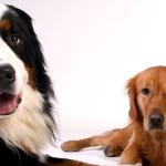 いくつ知っていますか?珍しい犬種
