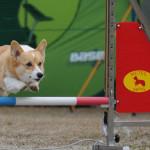 トレーニングで表情も輝く犬たち!
