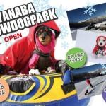 外遊び好き必見!!愛犬とスキー場で雪遊び!思いっきり遊ぼう!