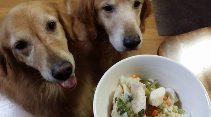 ずっと健康でいて欲しい!愛犬の正しい「食」学んでみませんか?