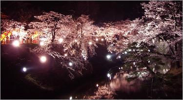 new_上田城_夜桜