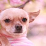 ペットと楽しむ♪長野のお花見スポット3選!
