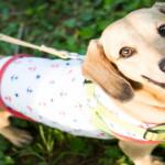 「犬を理解するしつけ教室!」松本で開催されたお散歩コミュニティーに参加してきました