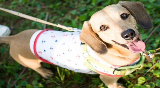 飼い主さんがわんことお散歩しながら学ぶ!「犬を理解する」しつけ教室