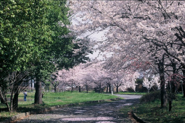 new_桜八幡原史跡公園