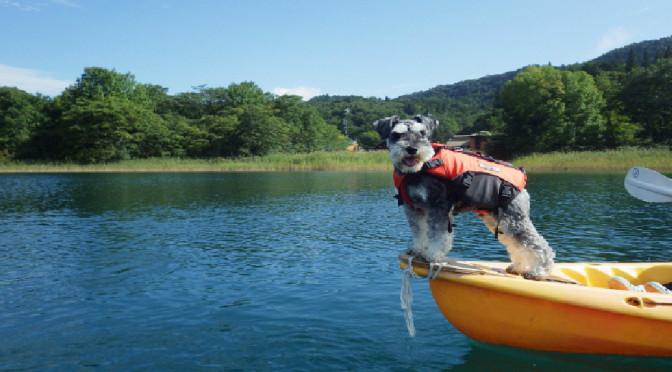 夏のおでかけは白馬で決まり!犬と一緒にできるアクテビティー!!